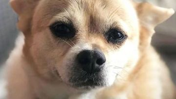 The deaths of two dogs has sparked fears of