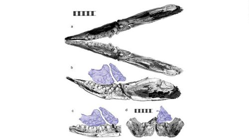 CT scans revealed pebble-like teeth for Cartorhynchus.