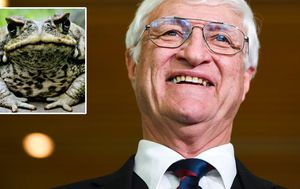 Bob Katter's $2m plan for children to use rifles to hunt cane toads