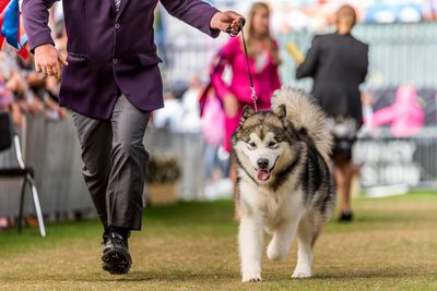 Best puppy in show: Alaskan malamute