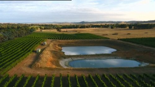 Winemakers are optimistic about the future of the industry.