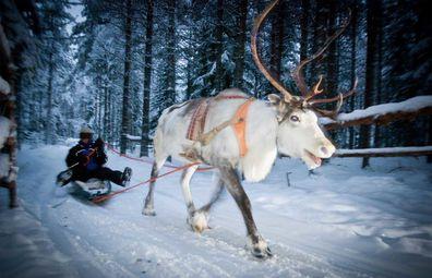 Exodus Travels Finnish sledding with reindeer