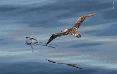 Flight by Sue Forbes