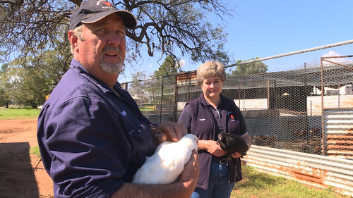 Ian and Pauline Freeth say demand from their chooks has risen in recent weeks.