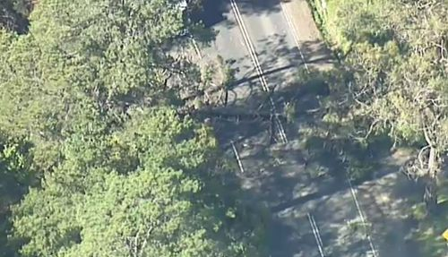 A man has been killed during wild weather hitting Victoria after a tree fell across a roadway.