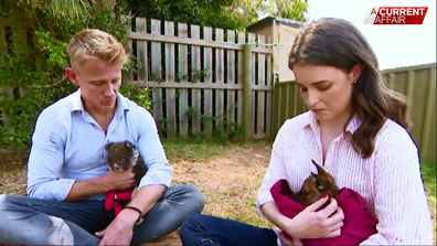 TV vet signs up to save animals wounded in bushfires
