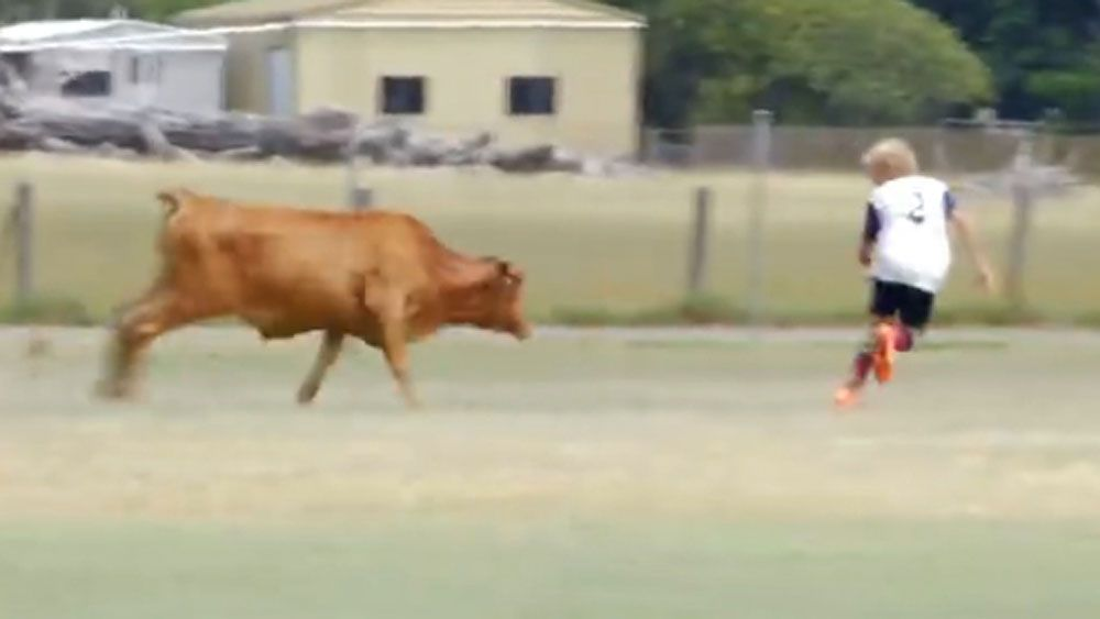 Charging Bull chases football players