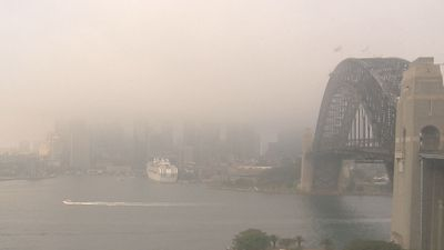 Twelve domestic flights delayed due to Sydney fog