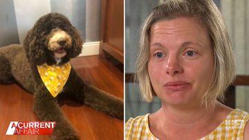 Guardian dog owners devastated after breeder takes pets back