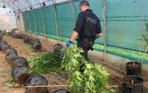 Police seize $7.6 million cannabis haul, charge two men after raid on illicit plantation