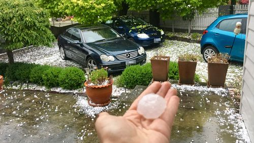 Huge hailstones litter a front yard after the storm rolled through the eastern suburbs. (Carlee Williamson/Supplied)