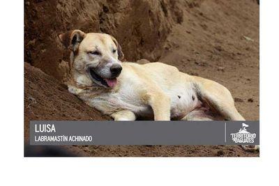 Luisa relaxing in some lovely dirt.