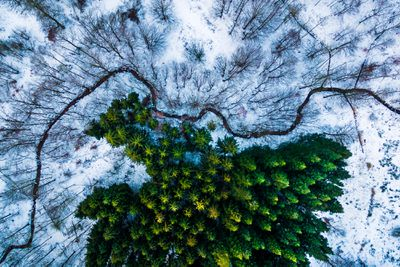 "<p><a href=""http://www.dronestagr.am/author/mbernholdt/""><strong>Michael Bernholdt</strong></a><strong>: Kalbyris Forest, Denmark</strong></p> <p><strong></strong></p>"