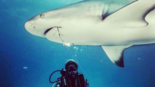 Diver Christina Zenato has been removing fishing hooks from sharks in the Caribbean.