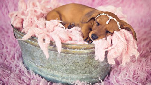 Cindi's pups will be getting their own newborn shoot - just like their mother. (Supplied)