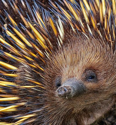 'Prickly' - Commended