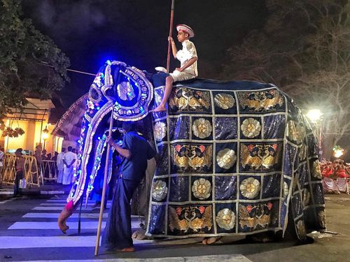 The 'Save Elephant Foundation' alleges that the costume hides her malnourished body.