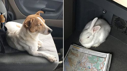 Abandoned dog leads rescuer to rabbit friend