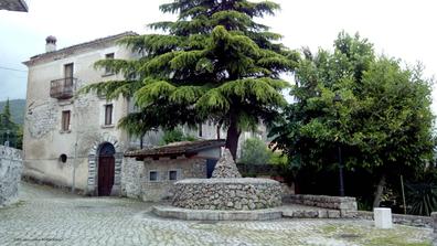 Giant elm tree in Italian village, Campodimele