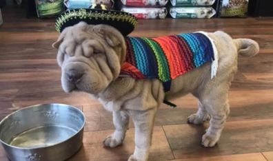 Dog wearing outfit