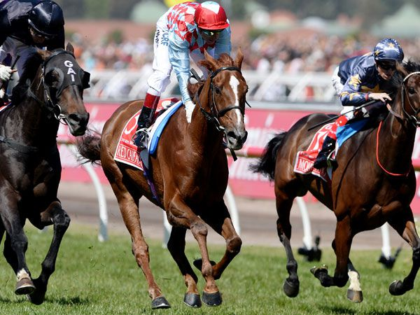 Three-time Melbourne Cup runner-up Red Cadeaux. (Supplied)