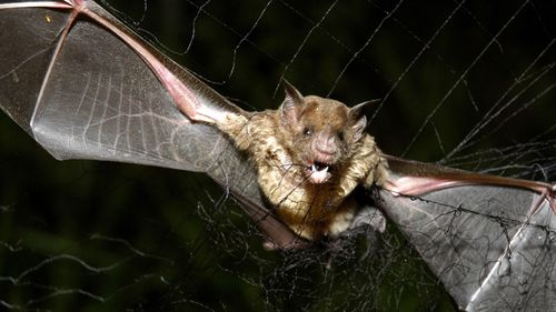 No humans have contracted rabies in the UK from animals - other than bats - for over 100 years.