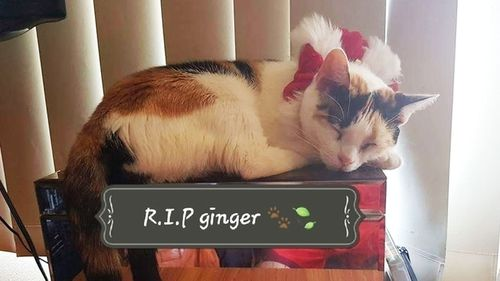 Ginger was found with her stomach slit open by the side of the road in Collerton.