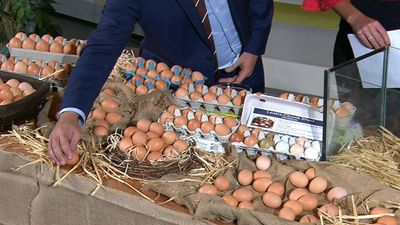 Egg producer hit with heavy fine over false free range claims