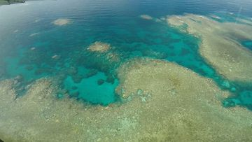 Marine heatwave more damaging to Great Barrier Reef than tropical cyclone