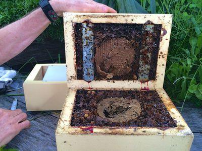 Splitting the Hive