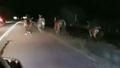 Horses stampede down US highway