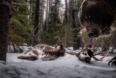 'Grizzly leftovers'. Winner - Animals in their environment.