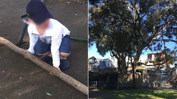 A Sydney couple has accused their local council of stopping them from chopping down a tree in their back yard that is dropping huge branches into an adjoining park where children play.