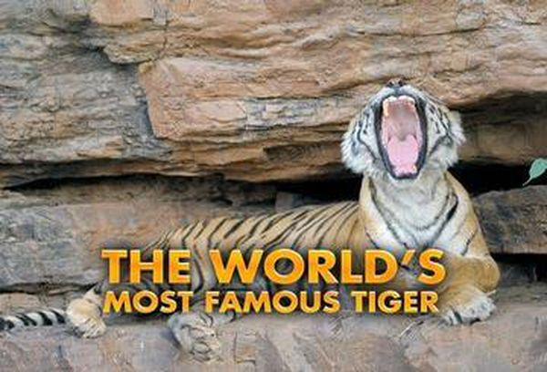 The World's Most Famous Tiger