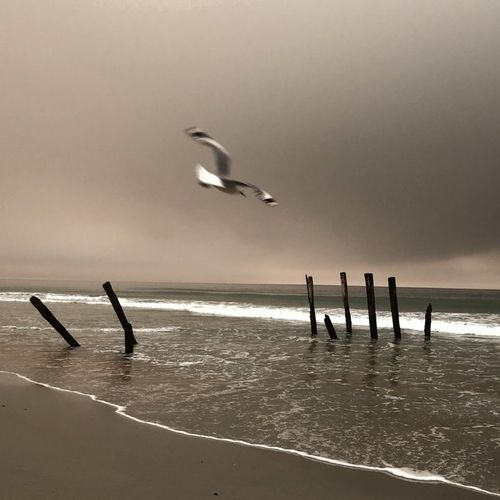 Smoke hangs over a beach in Dunedin, which is located 2100km east of Sydney.