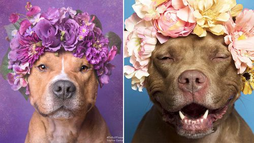 The photographer harnessing 'flower power' to find new homes for shelter dogs