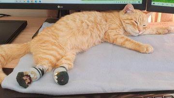 pascoe cat