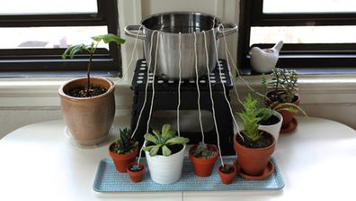 A DIY wicking system to keep indoor plants watered