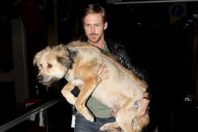 Sorry George, you're damn cute but your owner Ryan Gosling is even cuter.