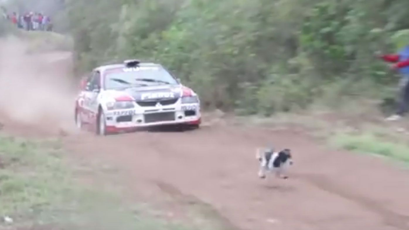 Dog miraculously escapes getting hit by rally car