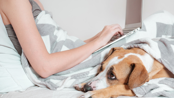 Woman working in bed with laptop and dog