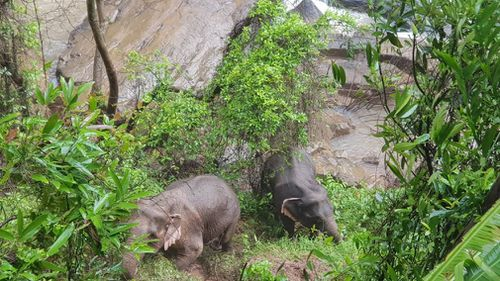 Six elephants killed at Thai national park after falling from waterfall