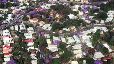 Penny Dahl, the traffic reporter for the TODAY Show, spotted the Sydney suburbs scattered with Jacarandas from the 9NEWS helicopter. (Instagram: @pennycopter)