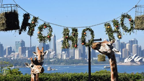 Taronga Zoo is open on Christmas Day
