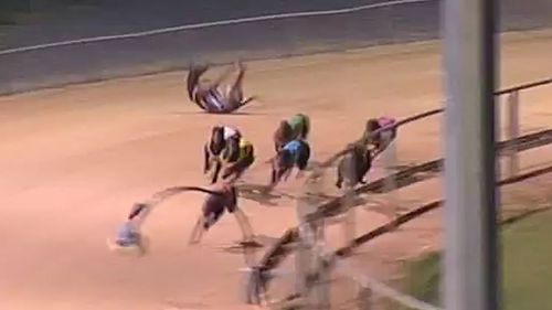 The greyhound takes a tumble and rolls several times (Image: YouTube/SA Race Replays)