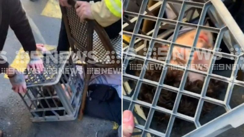 Members of the public, including a firefighter and tradies, were filmed holding the suspect down outside Hotel CBD with chairs. They used a milk crate to pin down his head.