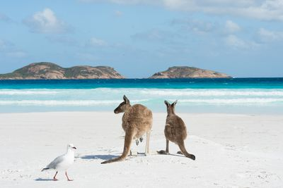 <strong>Lucky Bay in Cape Le Grand National Park, Western Australia</strong>