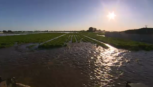 South Australia starts counting flood damage to farms