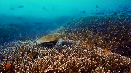 'Great Barrier Reef in very poor state'