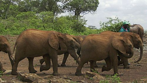 Ban on domestic ivory sales step closer